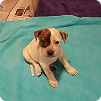 Adopt A Pet :: Aria - Byhalia, MS
