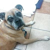 Adopt A Pet :: Cinnamon - Wilmington, NC
