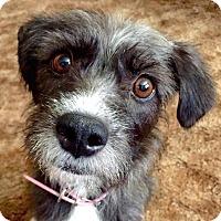 Adopt A Pet :: Myriad - San Diego, CA