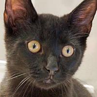 Adopt A Pet :: Mack - Sprakers, NY