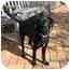 Photo 3 - Labrador Retriever Mix Dog for adoption in Metairie, Louisiana - LACEY