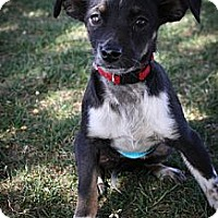 Adopt A Pet :: Flopsy - Broomfield, CO