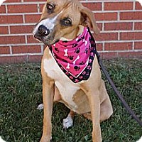 Adopt A Pet :: Daisy - Hutchinson, KS