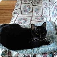 Adopt A Pet :: Ti-Two - Montreal, QC