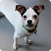 Adopt A Pet :: Trixie - Atlanta, GA