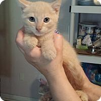 Adopt A Pet :: Cledus - Lawrenceville, GA