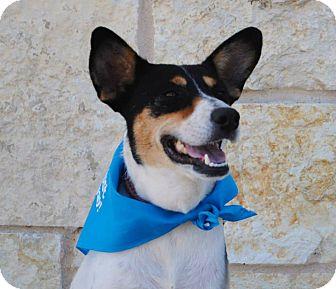 Australian Shepherd Mix Dog for adoption in Weatherford, Texas - Sylvia