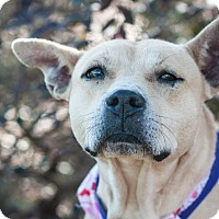 Adopt A Pet :: Lady - Gainesville, FL