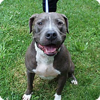 Adopt A Pet :: Bruno - Winchester, VA