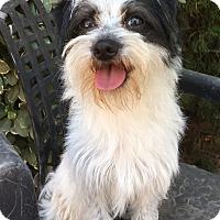 Adopt A Pet :: Marble - Van Nuys, CA