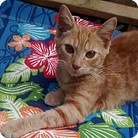 Adopt A Pet :: Phoenix - Jefferson, NC