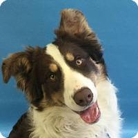 Adopt A Pet :: Jagger - Minneapolis, MN