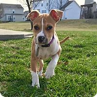 Adopt A Pet :: Sojo - Dayton, OH