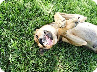 German Shepherd Dog Mix Dog for adoption in Waco, Texas - Nadja
