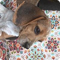 Adopt A Pet :: Vernon - Russellville, KY