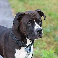 Adopt A Pet :: Jock - Winfield, PA