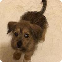 Adopt A Pet :: Morris - McKinney, TX