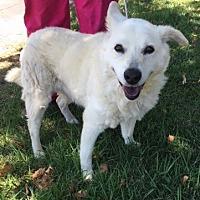 Adopt A Pet :: Tammy - Temecula, CA