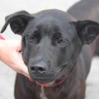 Adopt A Pet :: Clyde - Russellville, KY