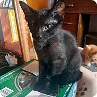 Adopt A Pet :: Lucio - Mississauga, Ontario, ON