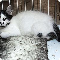 Adopt A Pet :: Mia M - Sacramento, CA