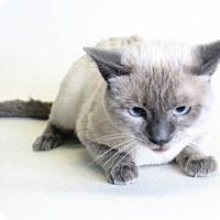 Adopt A Pet :: Mu-Shu - Redding, CA