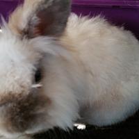 Adopt A Pet :: Luna - Surrey, BC