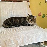 Adopt A Pet :: Goliath - Lancaster, MA
