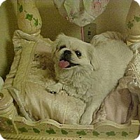 Adopt A Pet :: BRENDA - Cathedral City, CA