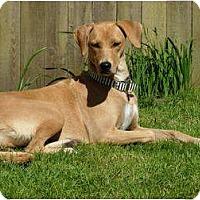 Adopt A Pet :: Tia - Pending - Vancouver, BC