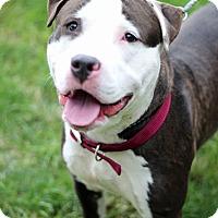 Adopt A Pet :: Marx - Tinton Falls, NJ