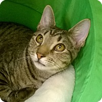 Adopt A Pet :: BOO AND BOSCO - Brea, CA