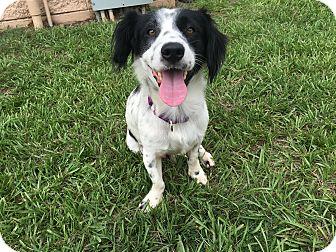 Dachshund/Terrier (Unknown Type, Small) Mix Dog for adoption in Myakka City, Florida - Oscar