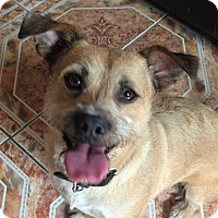 Adopt A Pet :: Percy - courtesy post - Redondo Beach, CA