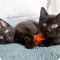 Adopt A Pet :: Fresca and Squirt - Chicago, IL