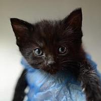 Adopt A Pet :: Jade - Dahlonega, GA