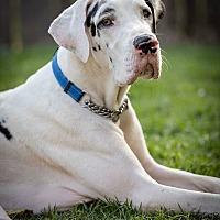 Adopt A Pet :: Memphis - Lubbock, TX