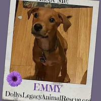 Adopt A Pet :: EMMY - Lincoln, NE