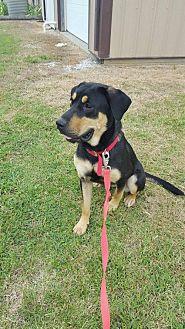 Adopt A Pet :: Misha  - Mt Vernon, IN