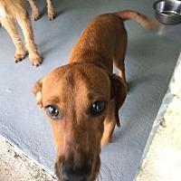 Adopt A Pet :: Buster - Waycross, GA