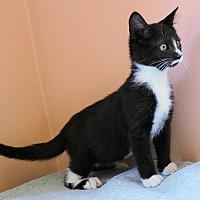 Adopt A Pet :: Gidget - Morganton, NC