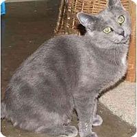 Adopt A Pet :: Black Beauty - Strathmore, AB
