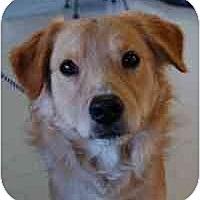 Adopt A Pet :: Buster - Scottsdale, AZ