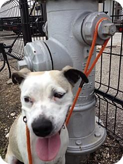 Terrier (Unknown Type, Medium) Mix Dog for adoption in Seguin, Texas - Sandi