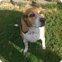 Adopt A Pet :: Goofy - Phoenix, AZ