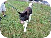 Akita Dog for adoption in Chicago, Illinois - Max