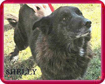 Shepherd (Unknown Type) Mix Dog for adoption in Benton, Arkansas - Shelly