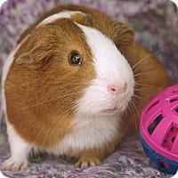 Adopt A Pet :: Bailey - Santa Barbara, CA