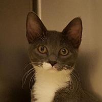 Adopt A Pet :: Bethany - Lago Vista, TX