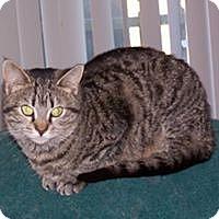 Adopt A Pet :: Gracie - McEwen, TN